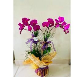 2'li Lila Orkide (İthal-Ahşapta)