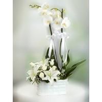 Orkide ve Lilyumlar