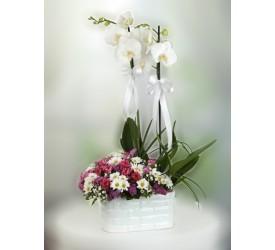 Orkide ve Mevsim Çiçekleri